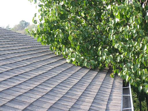 Tree causing roof damage